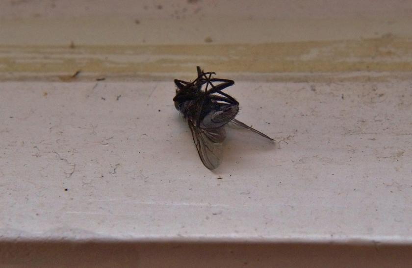 fly use
