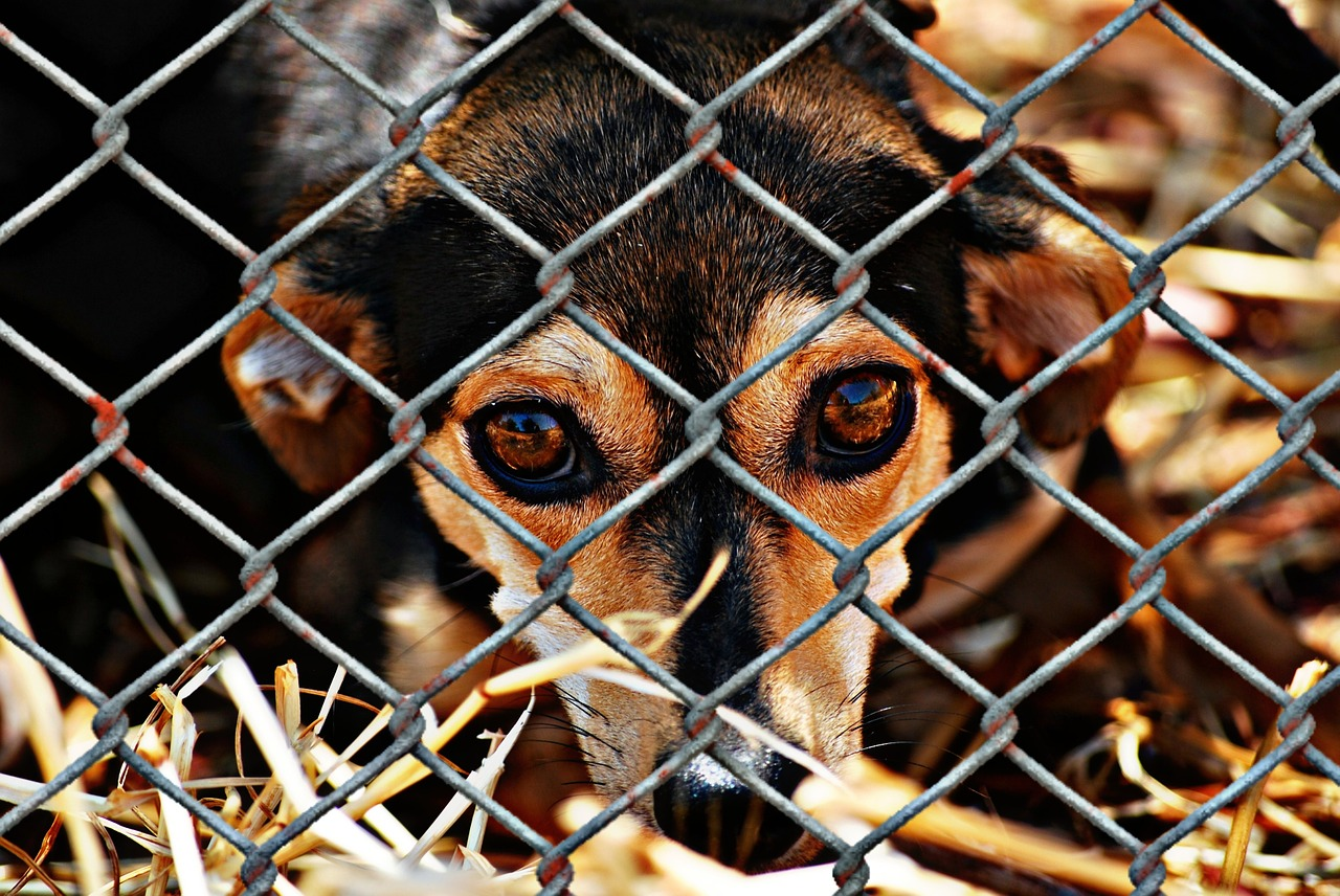The evil of puppy mills, and the Amish scum behind many in